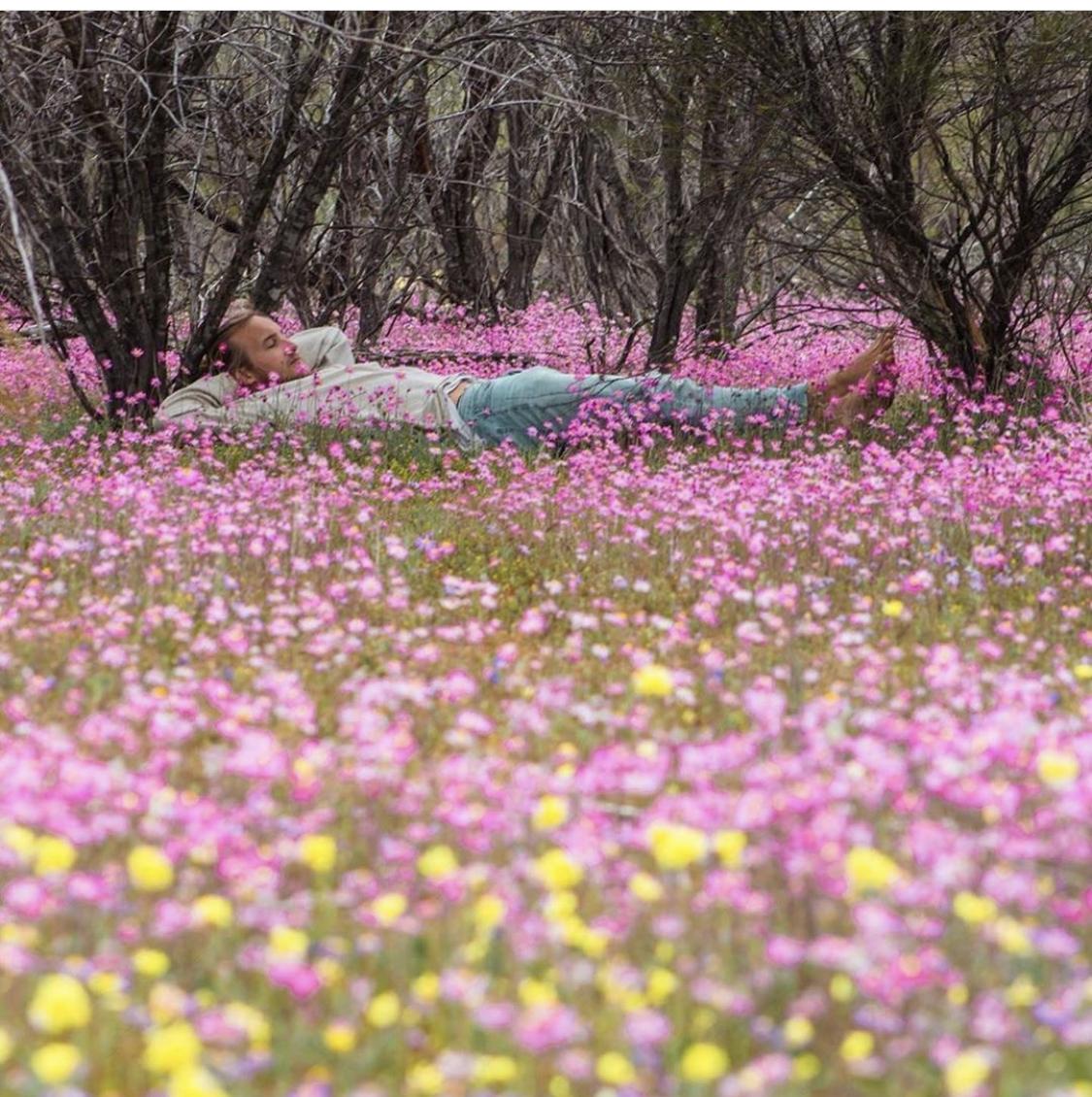 Wildflower Season is a Must